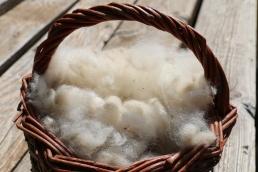 laine d'alpaga